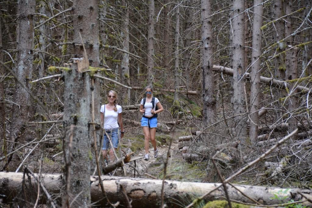 Dieser Wald hinterlässt bei uns einen düsteren Eindruck.